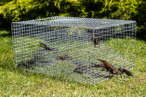 RUSTLER MULTI CRAYFISH TRAP