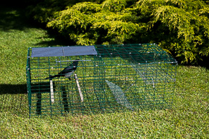 RUSTLER SINGLE MAGPIE/CORVID TRAP